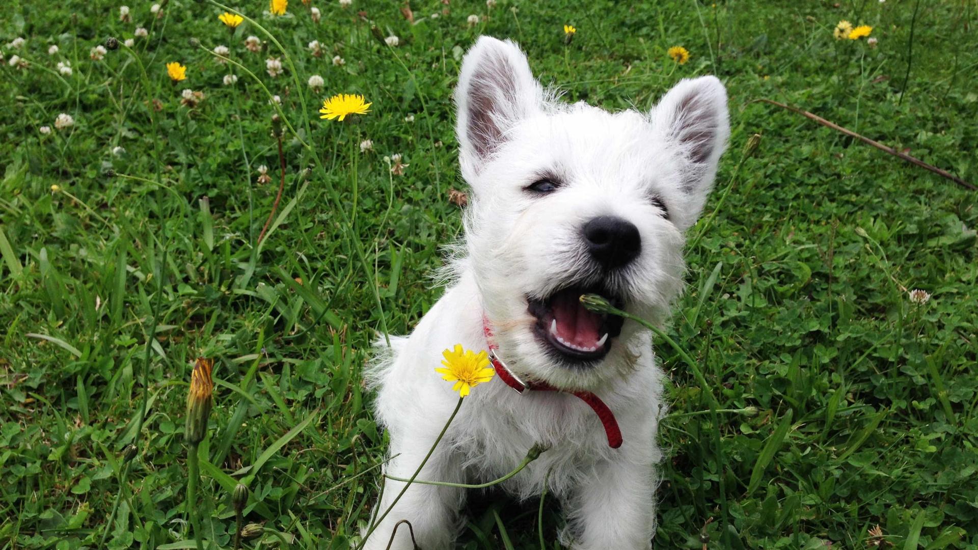 Espanha usa cães em doentes com Alzheimer e consegue benefícios