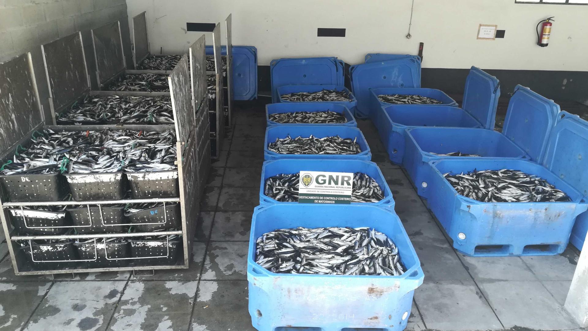GNR apreende cinco toneladas de pescado em Matosinhos