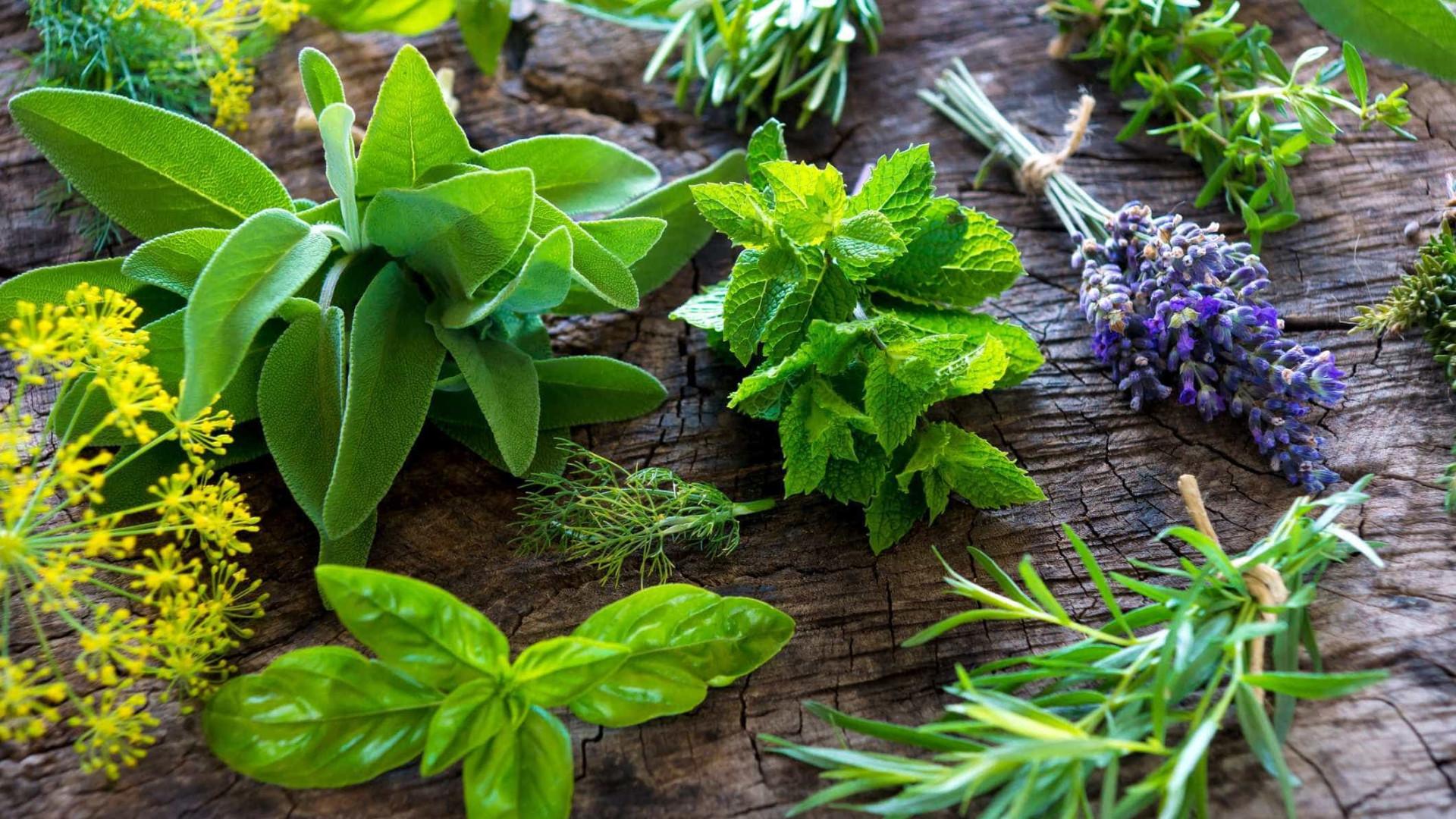 Ervas Aromáticas Para Temperar Legumes À Vapor