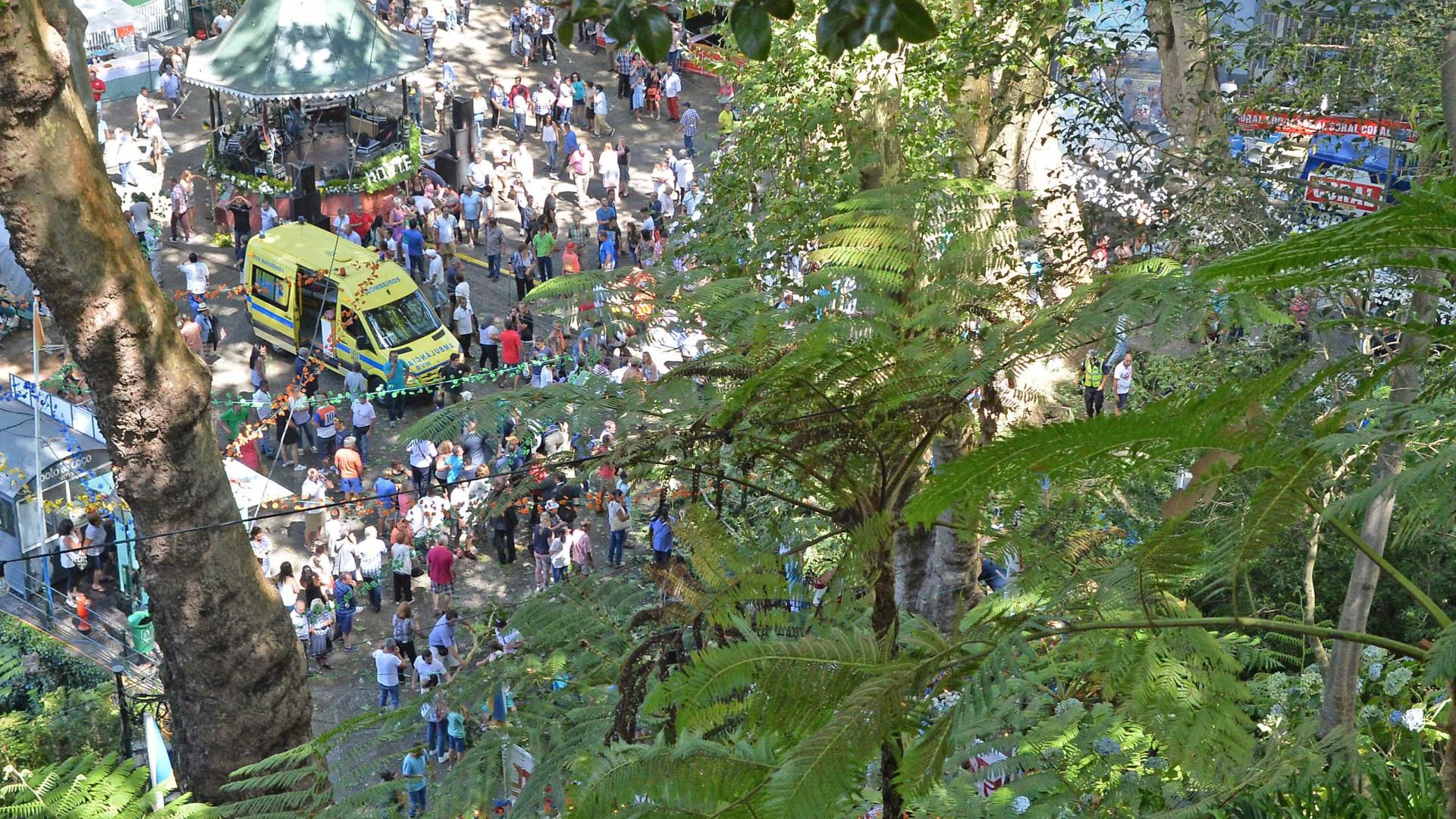 Já há imagens do local onde caiu uma árvore na Madeira