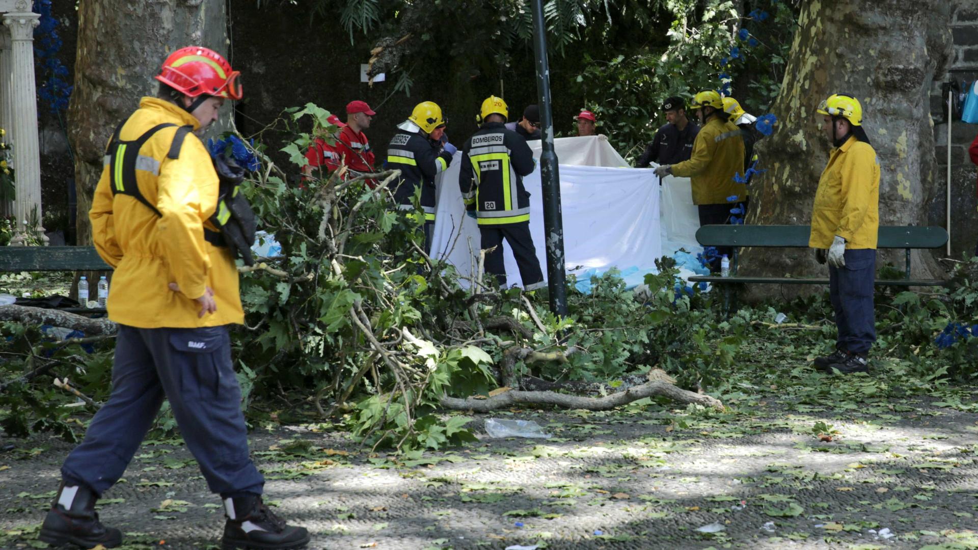 Feriado trágico na Madeira: A árvore da discórdia que ceifou 13 vidas