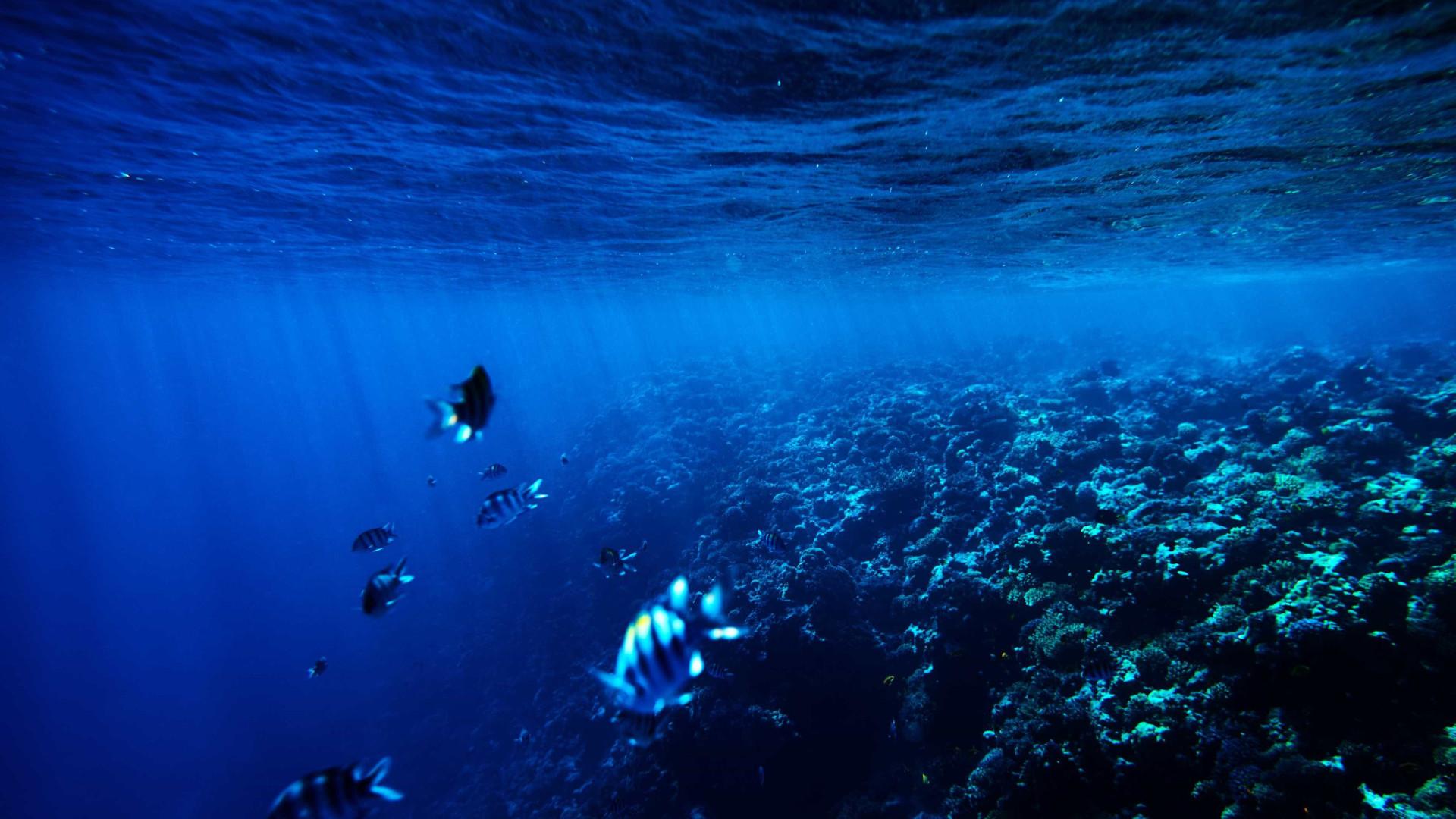 Obras de mudança de património subaquático vão custar 1,4 milhões