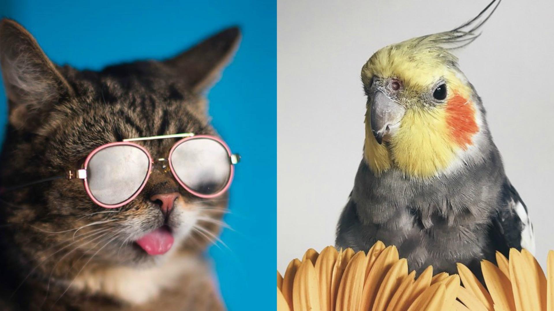 Estes animais são verdadeiros fenómenos de popularidade nas redes sociais