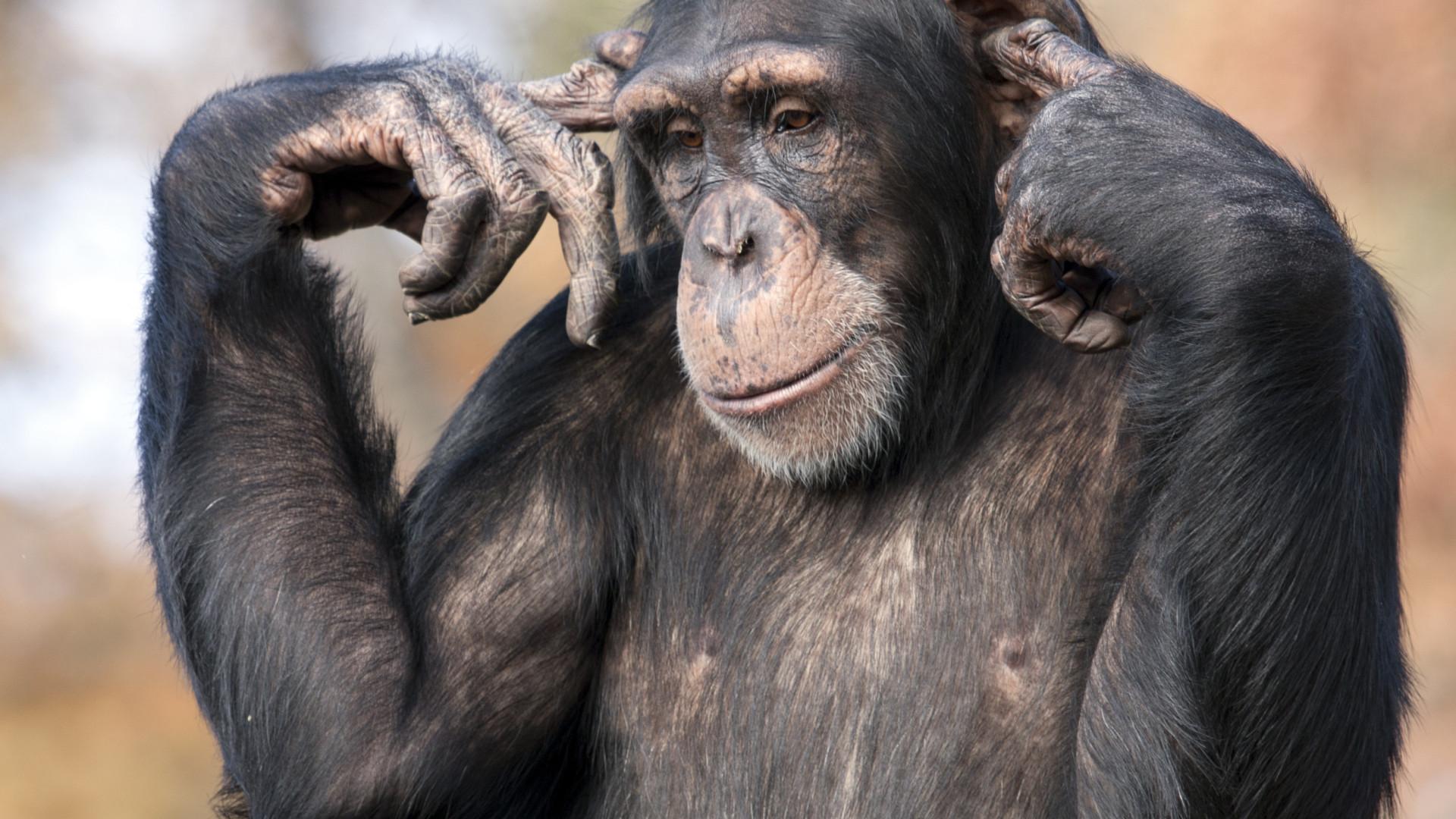 Conheça os 30 animais mais inteligentes do planeta