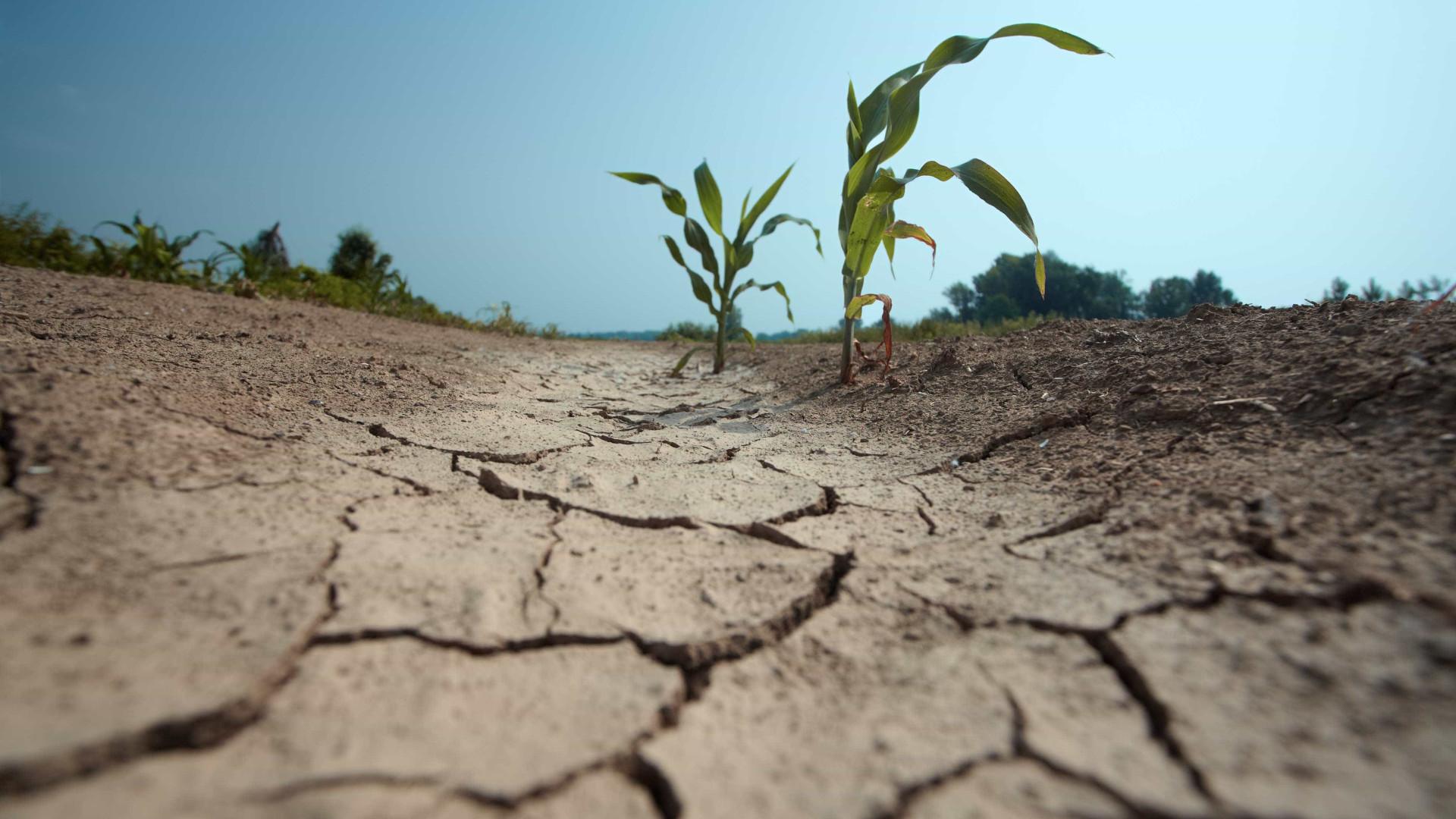 "Clima de Marrocos, Argélia e Tunísia está a ser ""empurrado"" para Portugal"