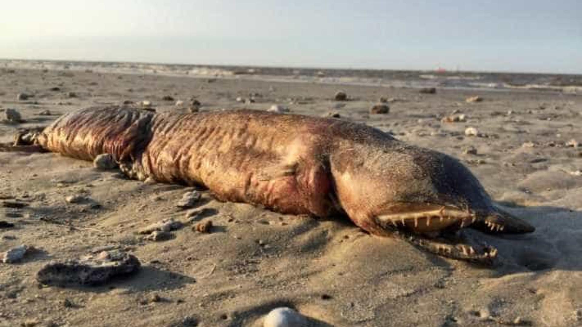 Animal misterioso deu à costa após passagem de furacão Harvey