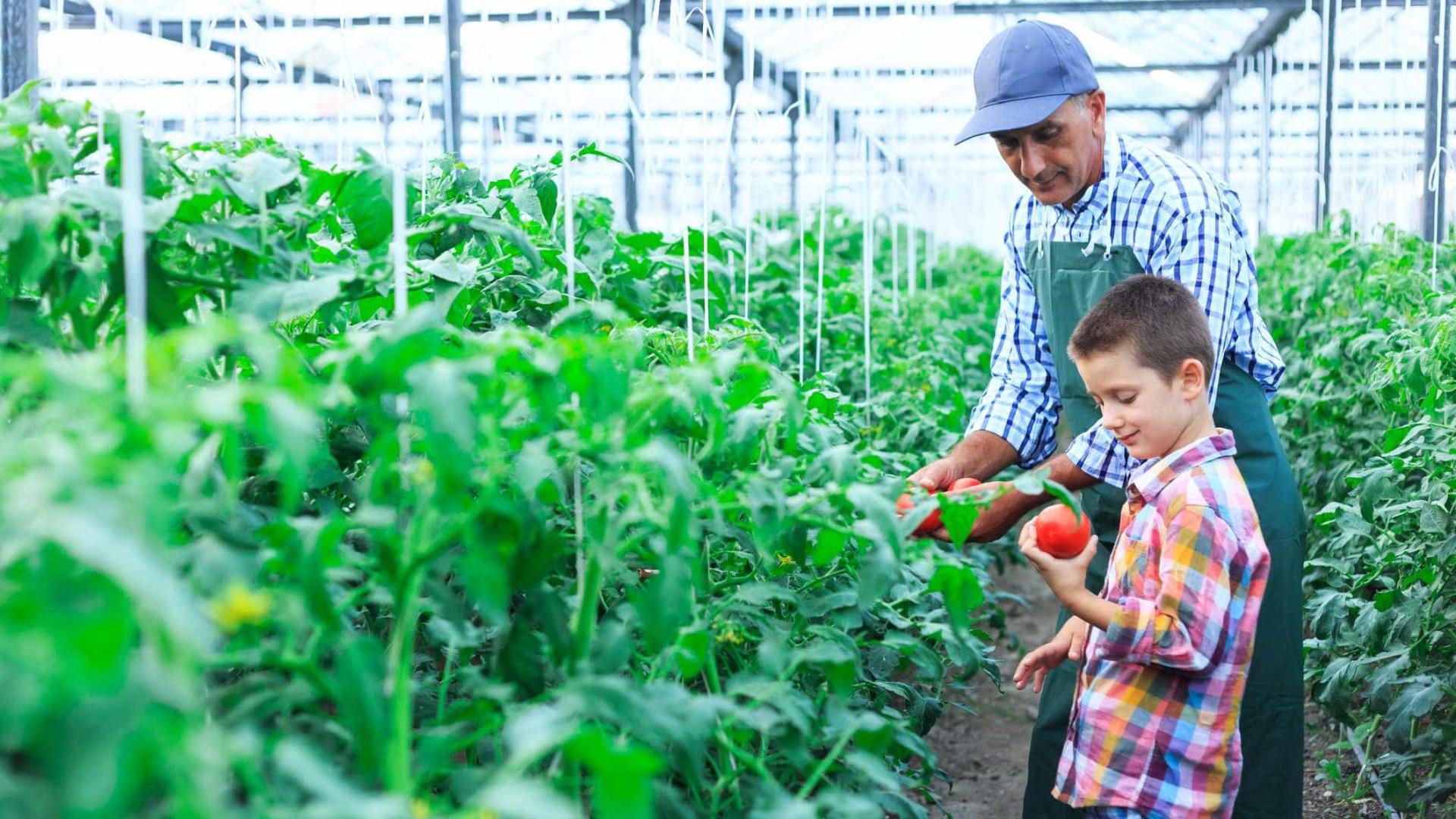 Mais de 4 mil crianças contactaram hoje com atividades agrícolas