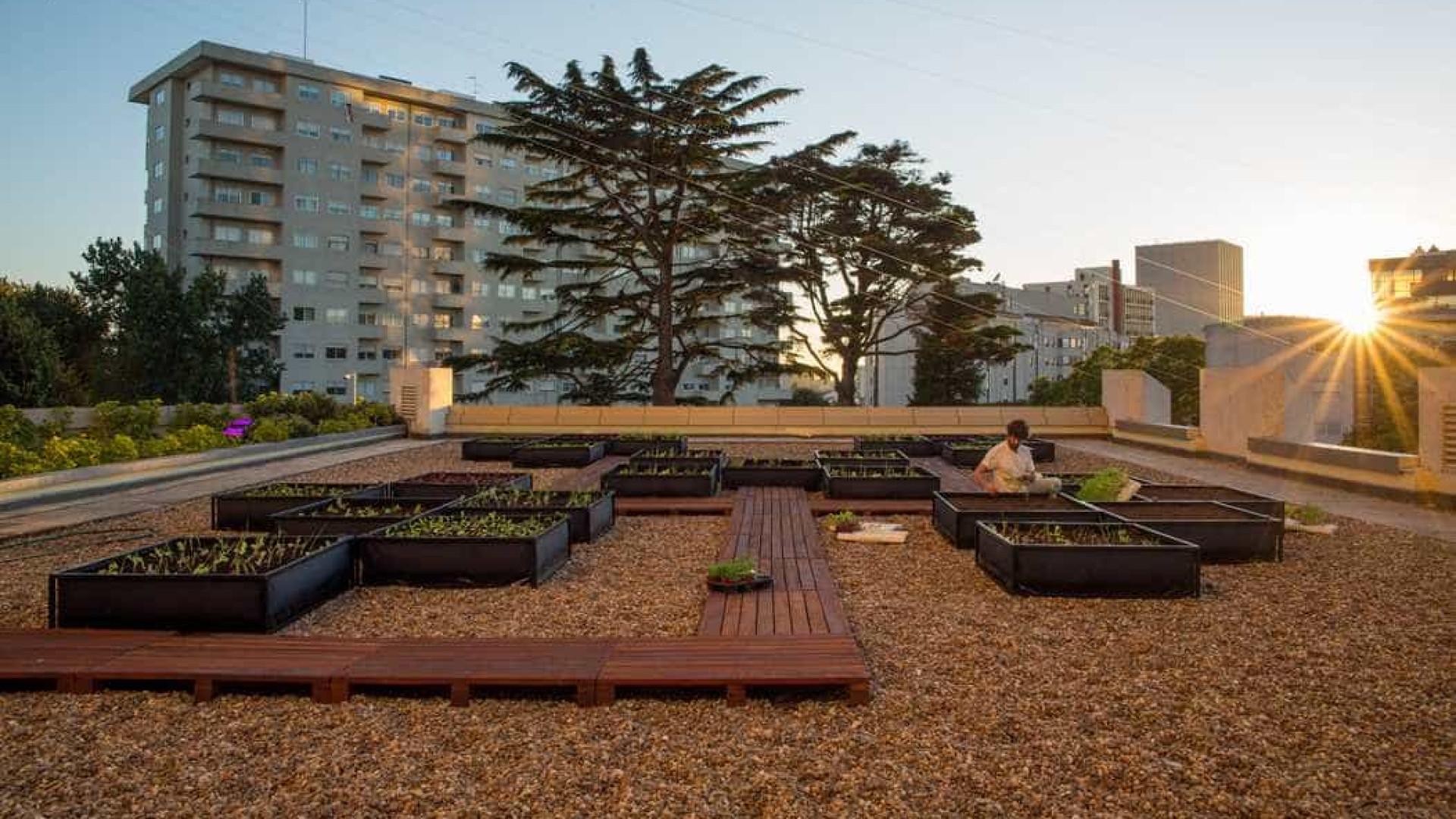 Uma horta urbana num terraço de um hotel? Sim, e no coração do Porto