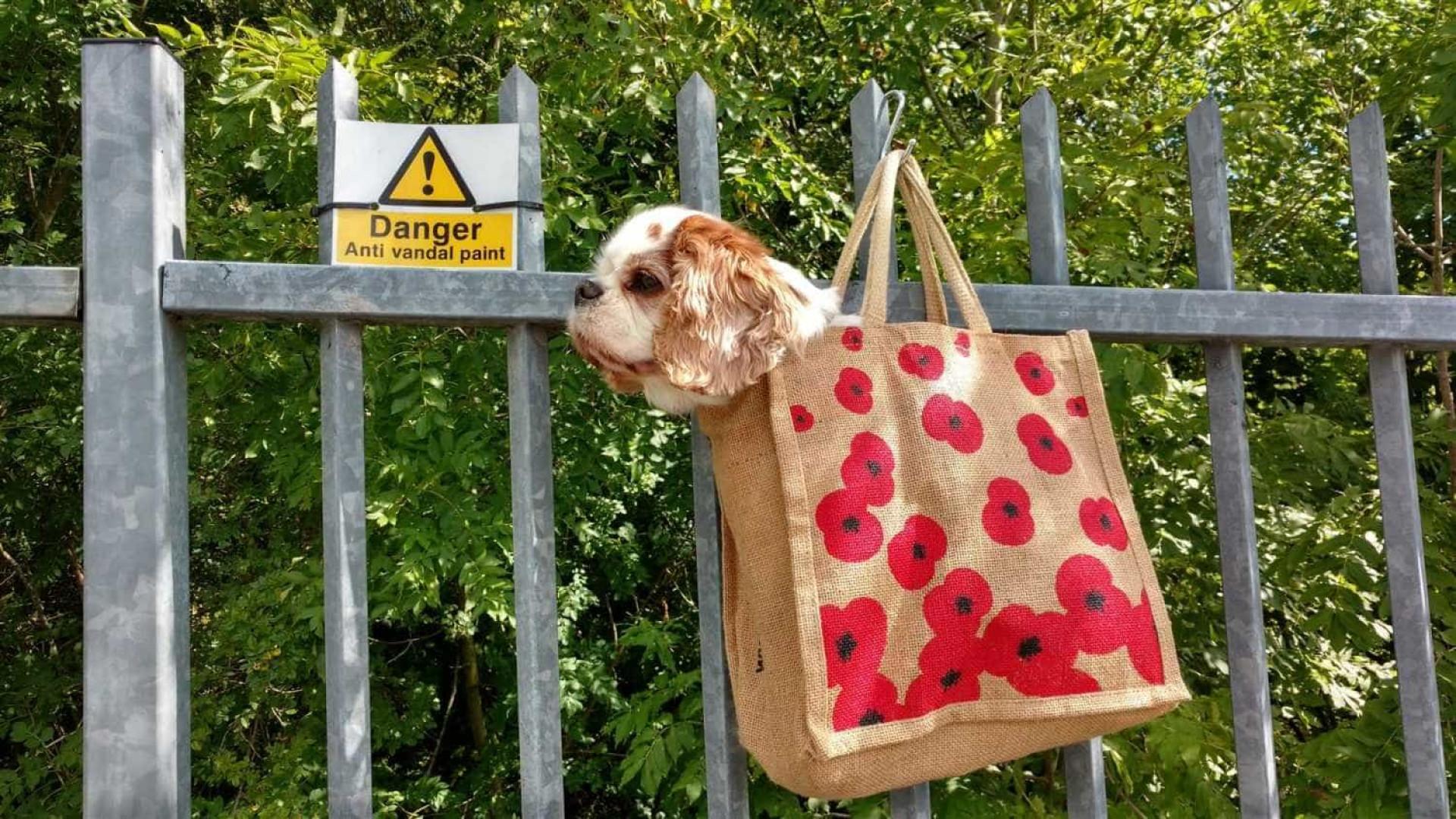 Cão com problemas de coração 'corre' o mundo numa mala