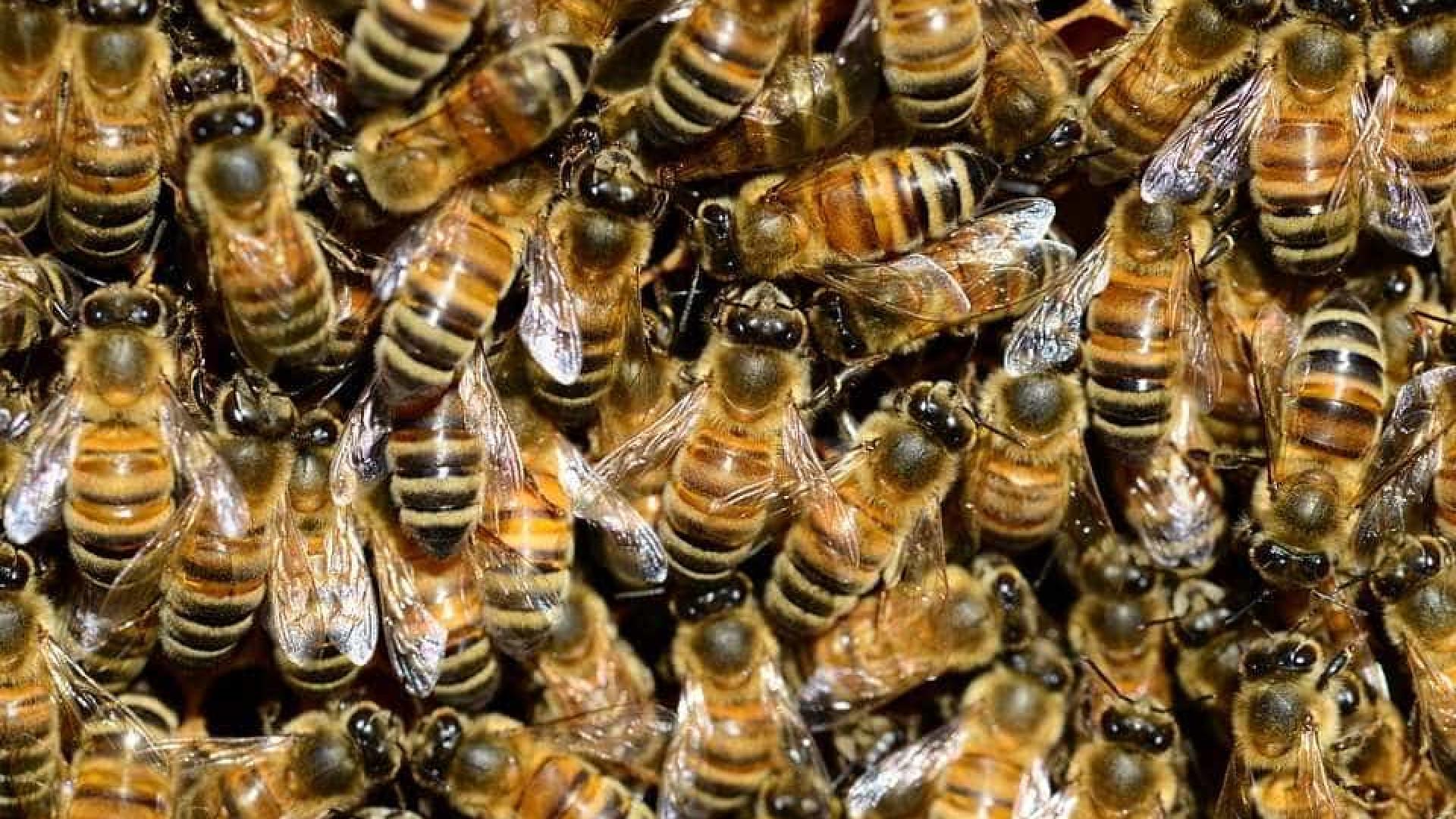 Justiça confirma restrições a inseticidas prejudiciais para as abelhas