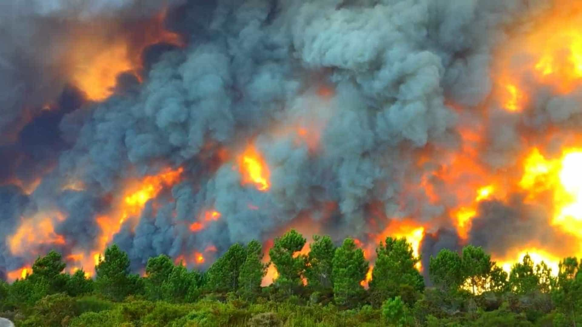 O impressionante inferno em Vieira de Leiria