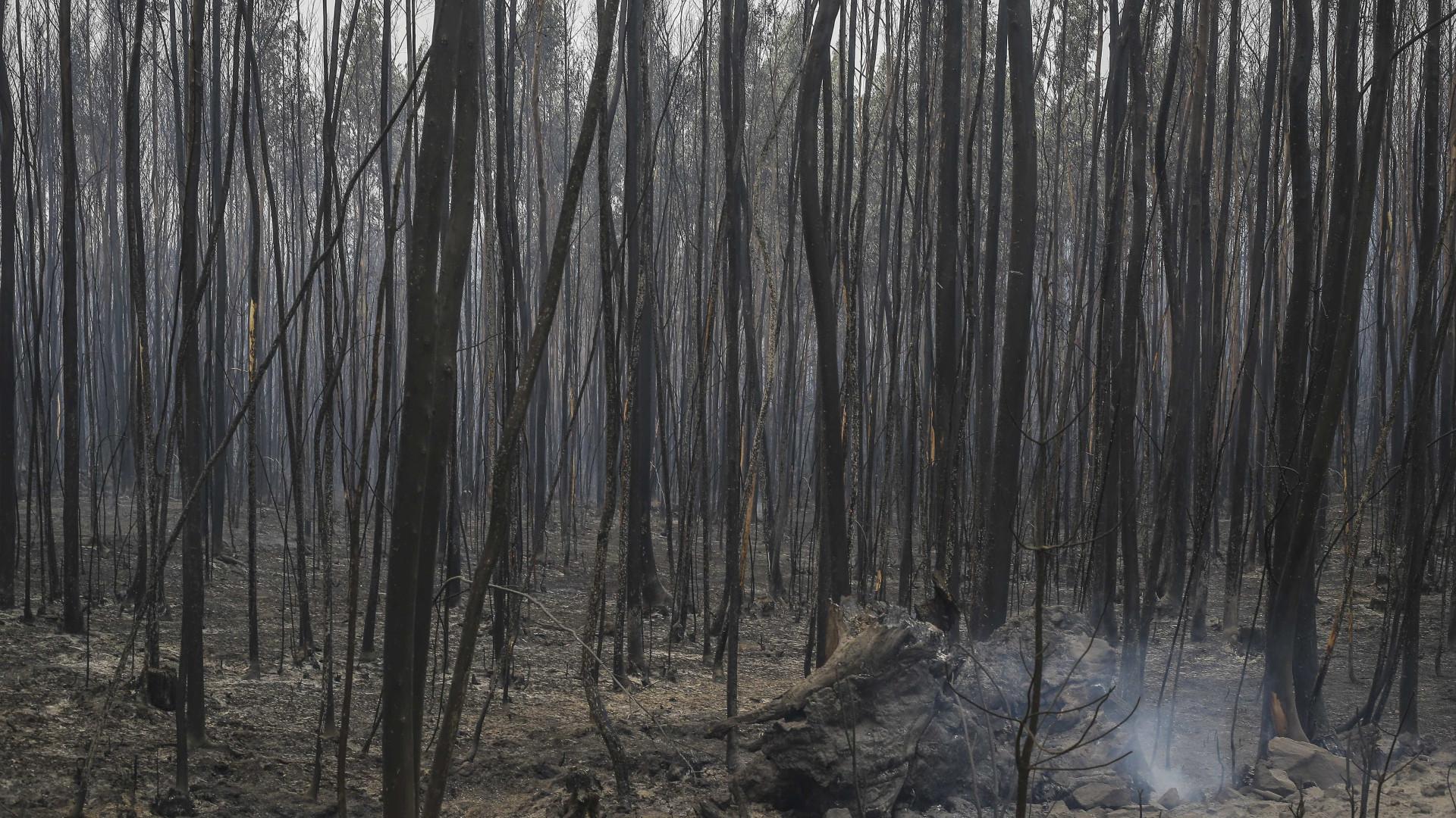 Luxemburgo envia 40 toneladas de bens para ajudar vítimas de fogos
