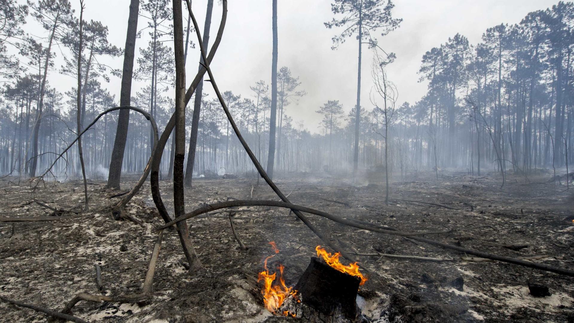 Uso de fogo controlado deve ser equacionado nas áreas protegidas