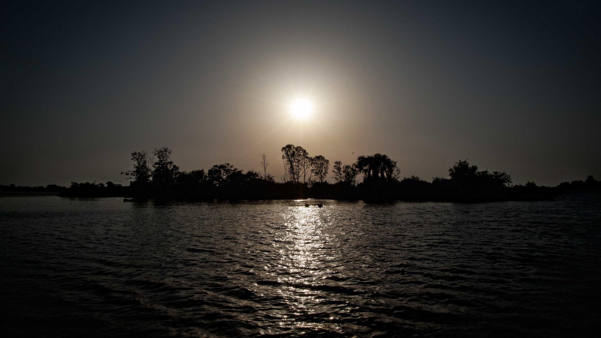 Camarão japonês detetado no estuário do Tejo
