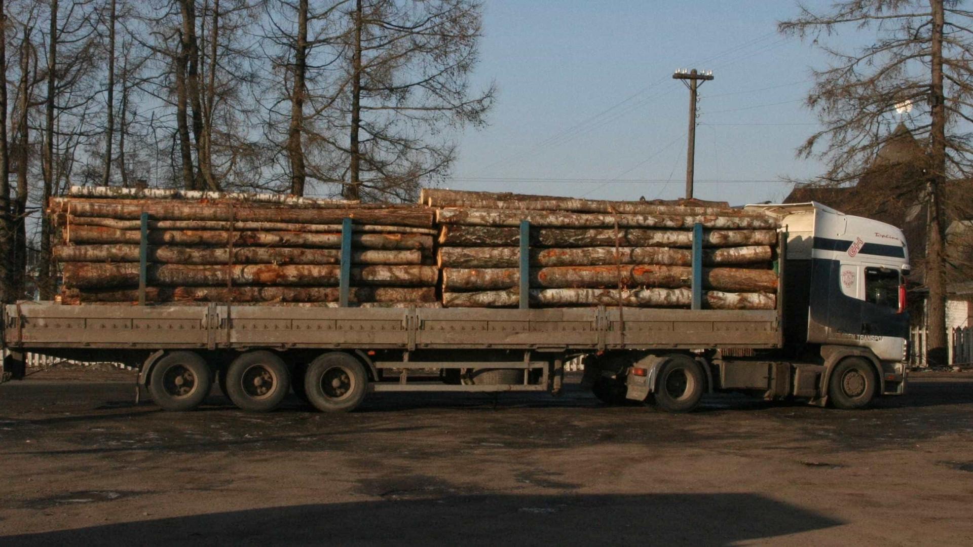 Madeireiros alertam para baixo preço pago pela madeira para trituração