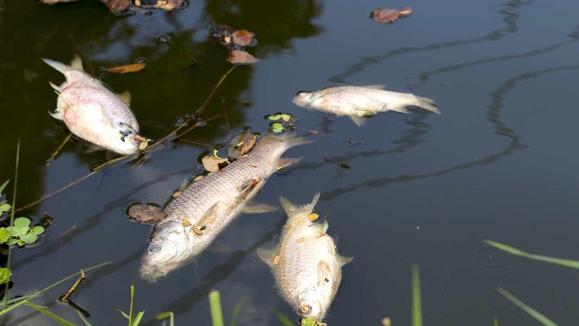 Relatório sobre morte de peixes no Tejo confirma contaminação da água