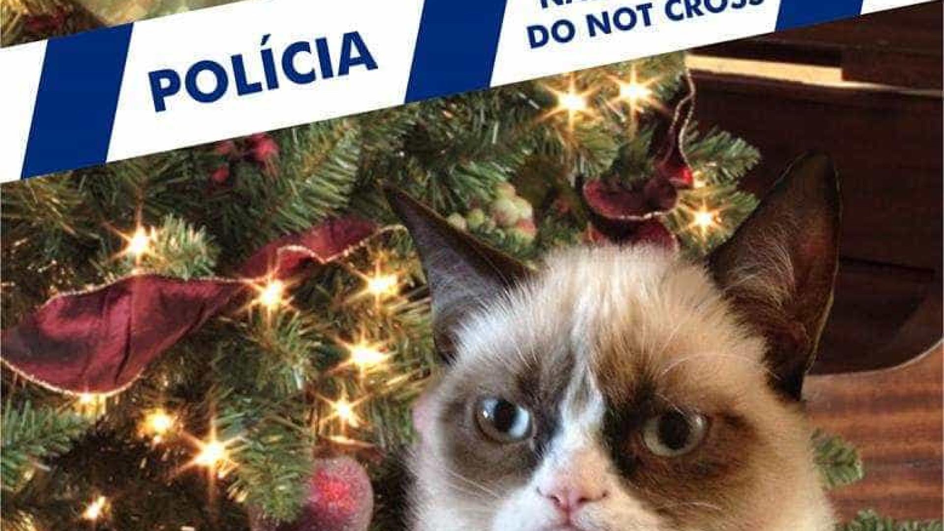 Conselho de segurança neste Natal para quem tem gatos