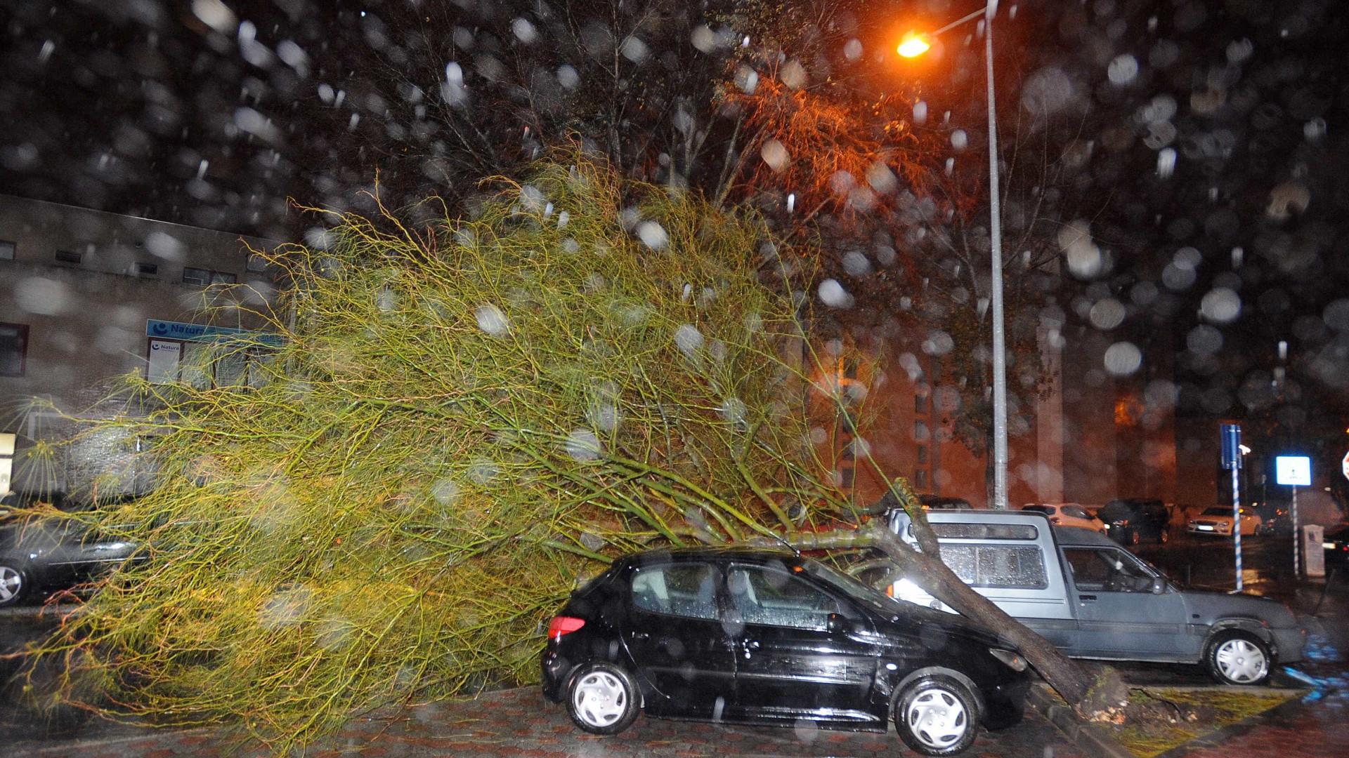 Tempestade Ana. Centenas de quedas de árvores e de estruturas