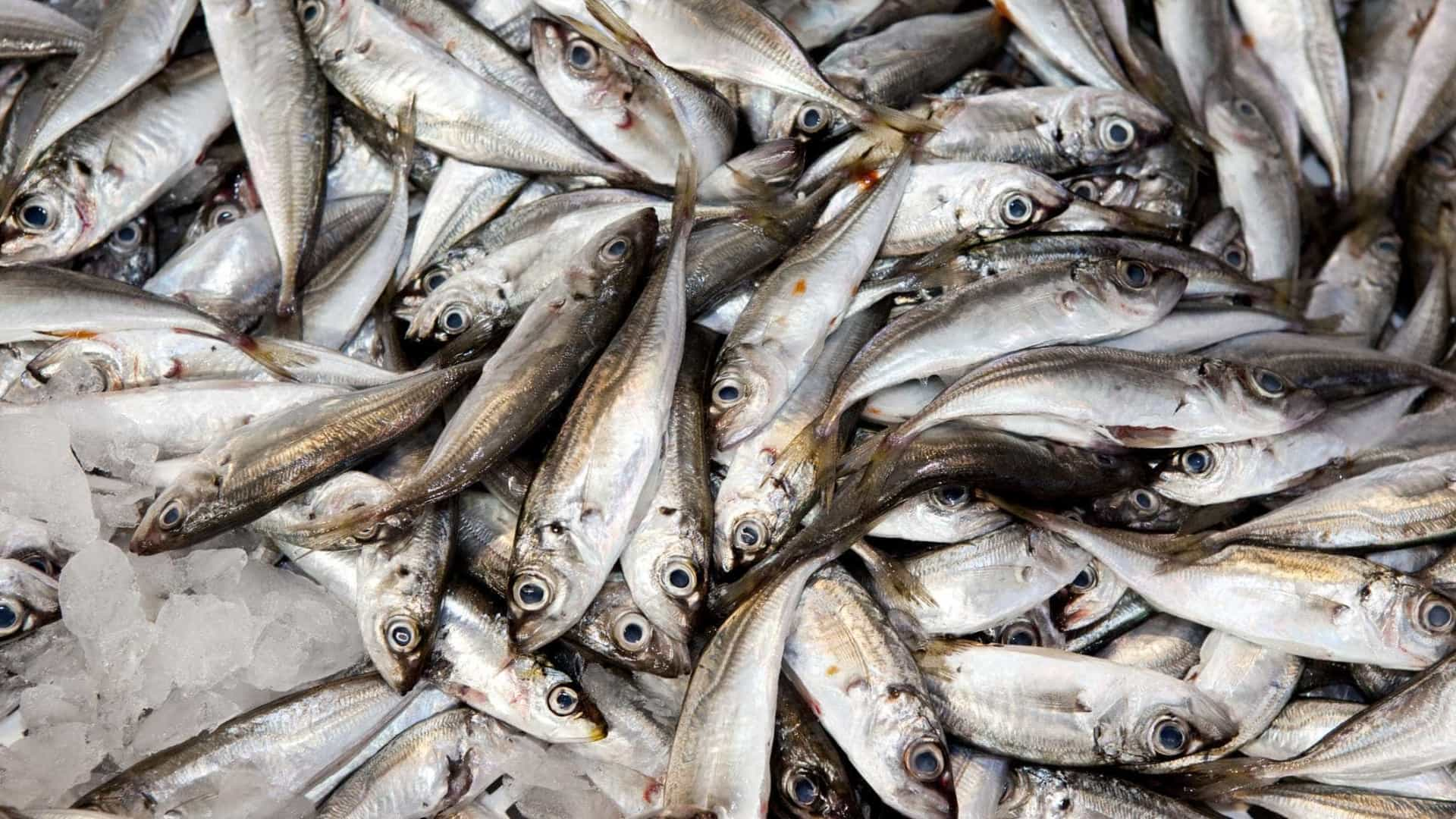 Apoios aos pescadores chegam até ao final de fevereiro, diz Governo