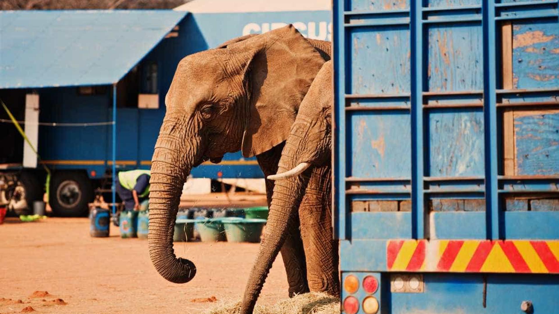 Protesto contra utilização de animais no circo na Ericeira