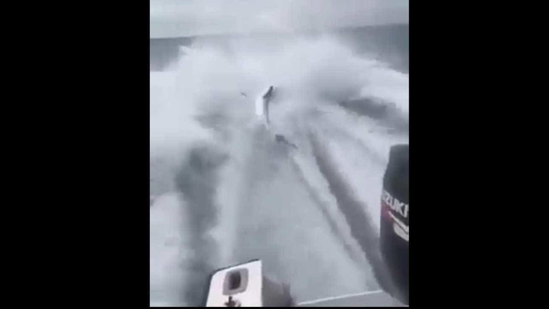 Grupo acusado de crueldade animal. Arrastaram tubarão preso a barco