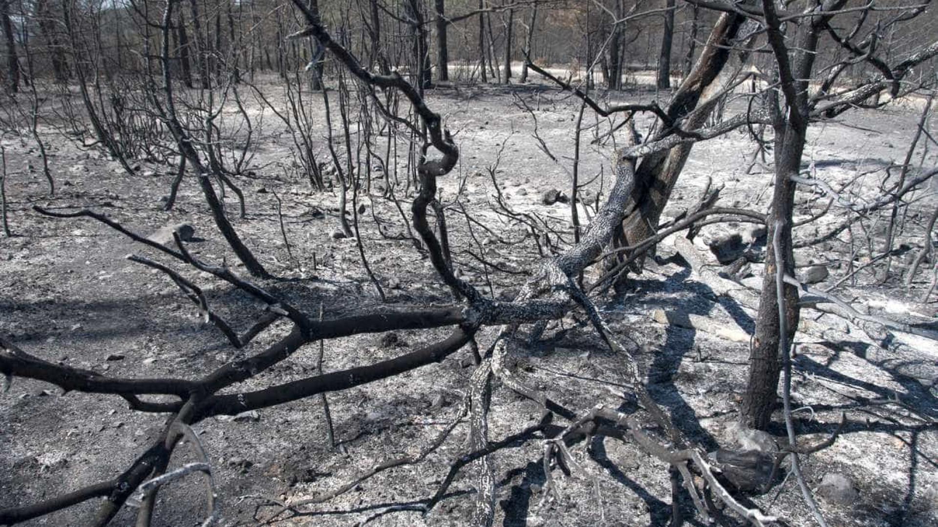 Número de mortos nos fogos de outubro sobe para 46