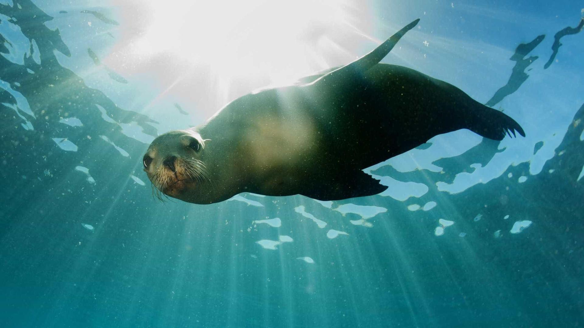Os mamíferos aquáticos mais incríveis do mundo