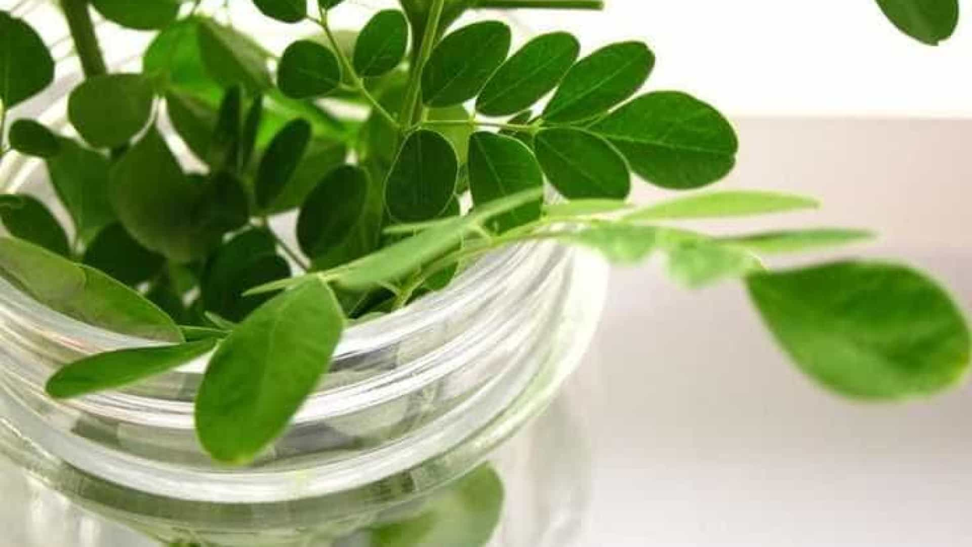 Moringa: É este o superalimento do ano