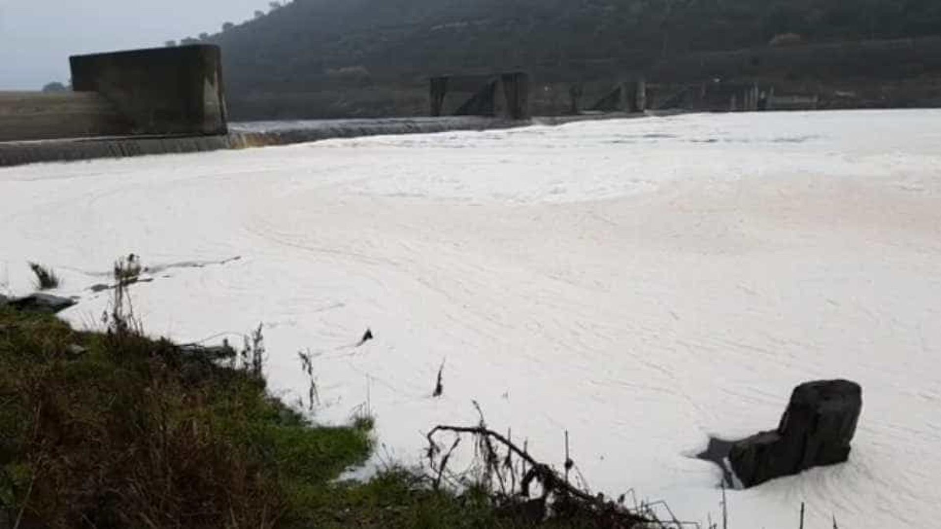 """PSD de Castelo Branco quer """"diagnóstico rápido"""" sobre poluição no Tejo"""