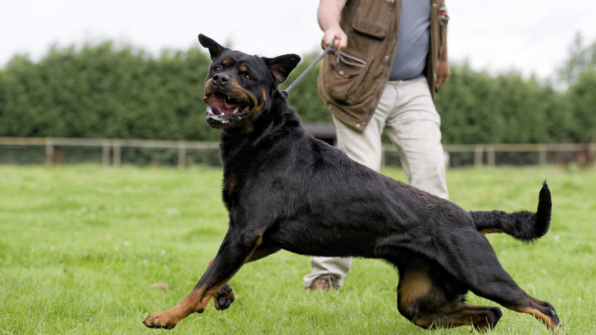 Mais de 250 casos de ataques de cães a pessoas no ano passado