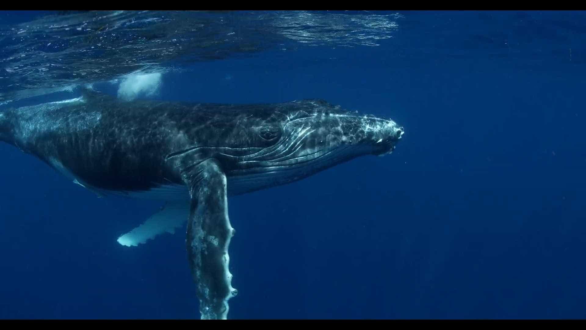 """Biólogos querem mostrar a """"riqueza enorme"""" de cetáceos no mar português"""