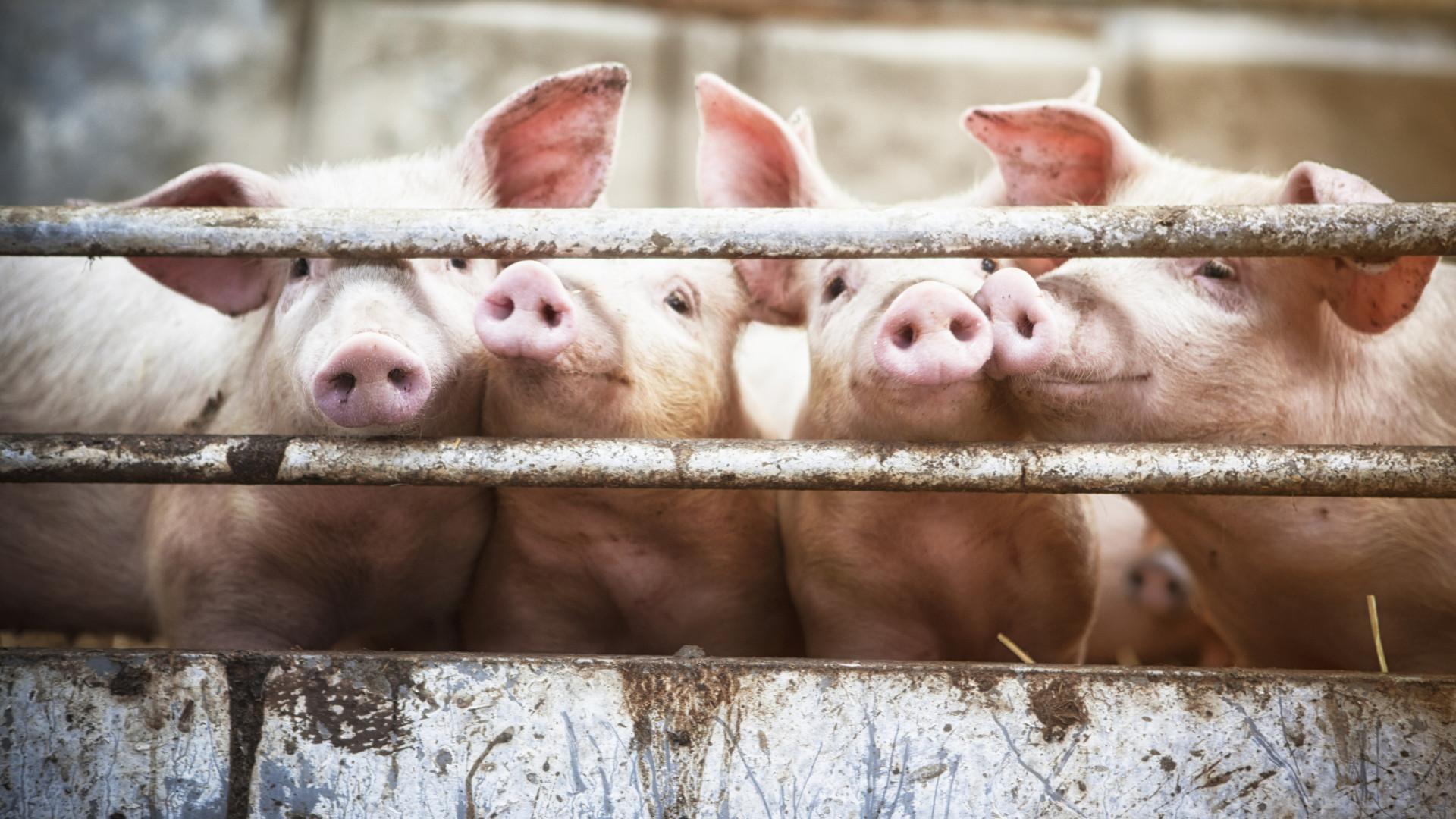 Há uma calculadora que diz quantos animais já comeu (ou salvou) até hoje