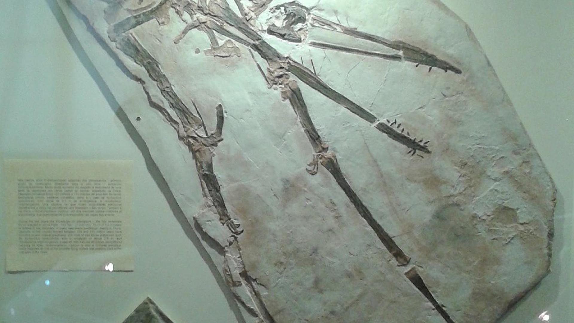 Pterossauros extinguiram-se repentinamente e não de forma lenta