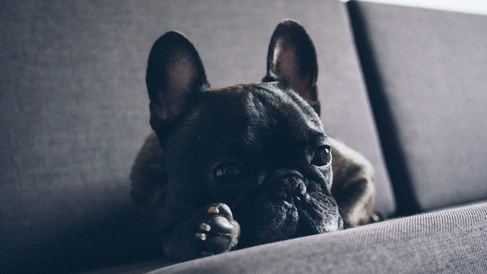 Companhia obrigou cão a viajar com bagagem de mão. Animal morreu
