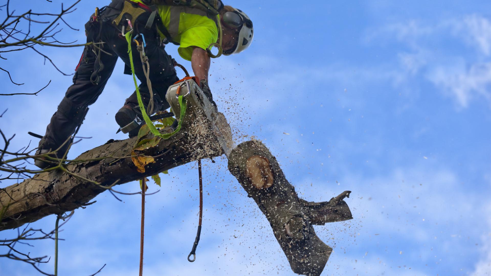 Abate de árvores em obra urbana de Buarcos gera indignação