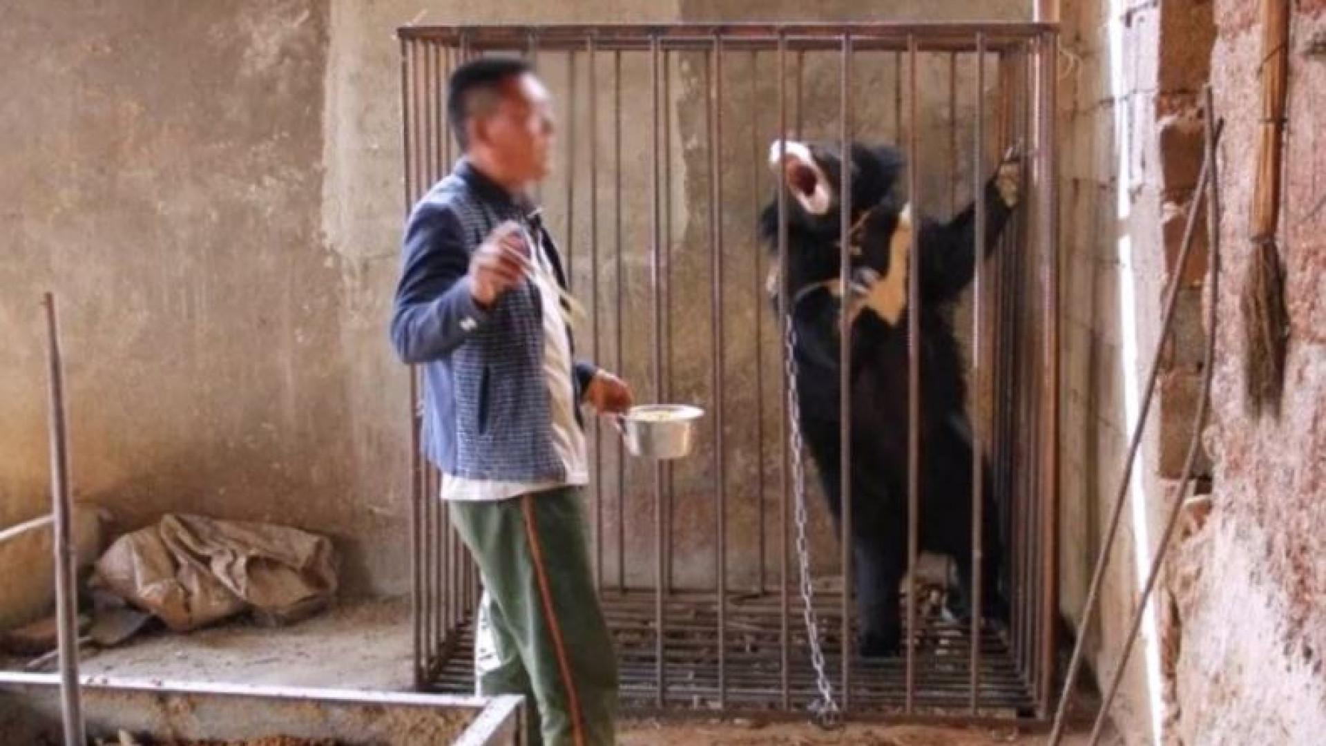 Adotou um urso pensando tratar-se de um cão