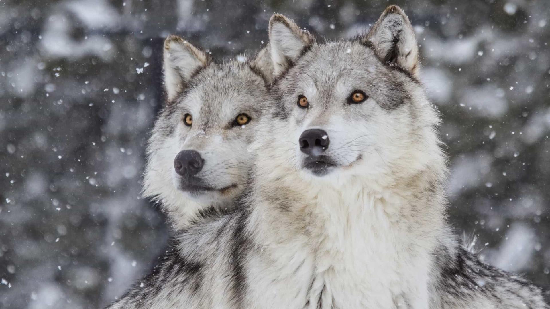 Romance: Os animais que se apaixonam