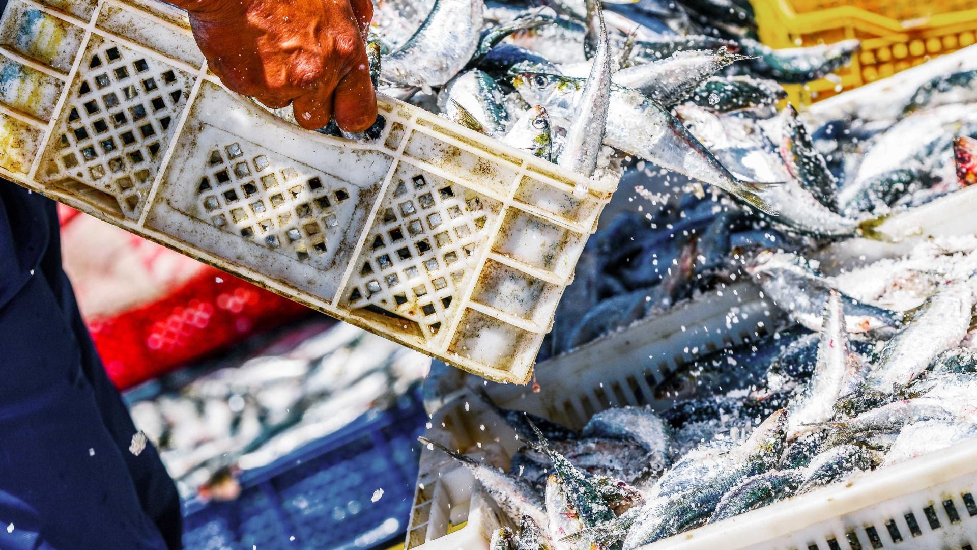 Corte para pescas portuguesas no próximo orçamento da UE ainda é proposta