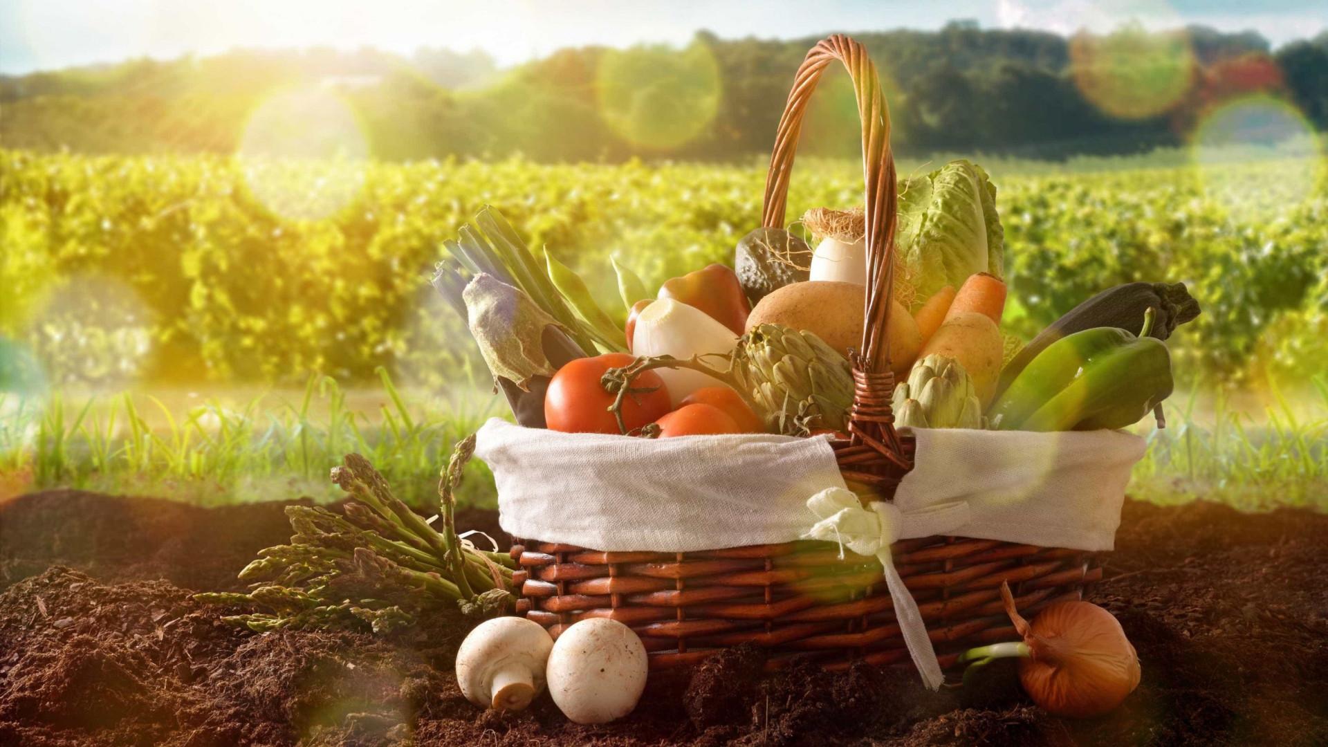 FAO: Quase 55% dos alimentos desperdiçados no mundo são frutas e vegetais