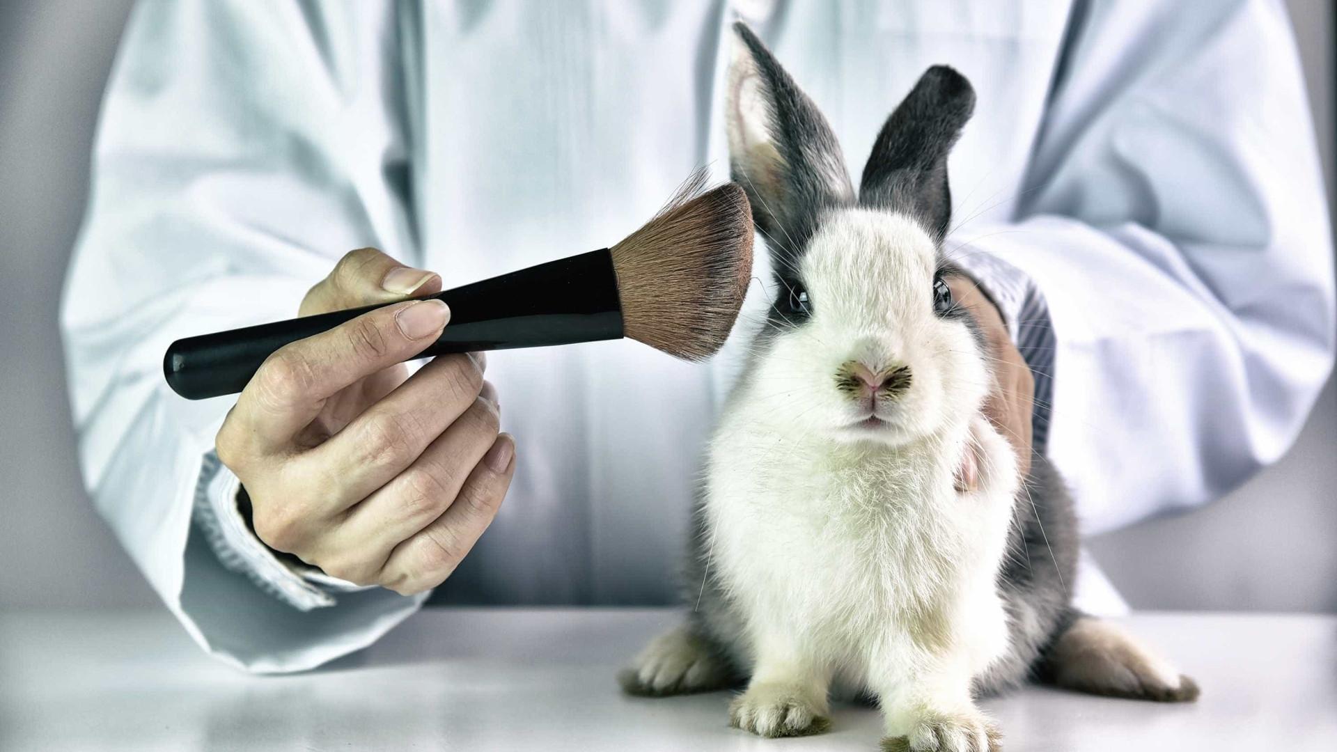 """""""Há quem não sinta empatia por animais alvo de testes em laboratório"""""""