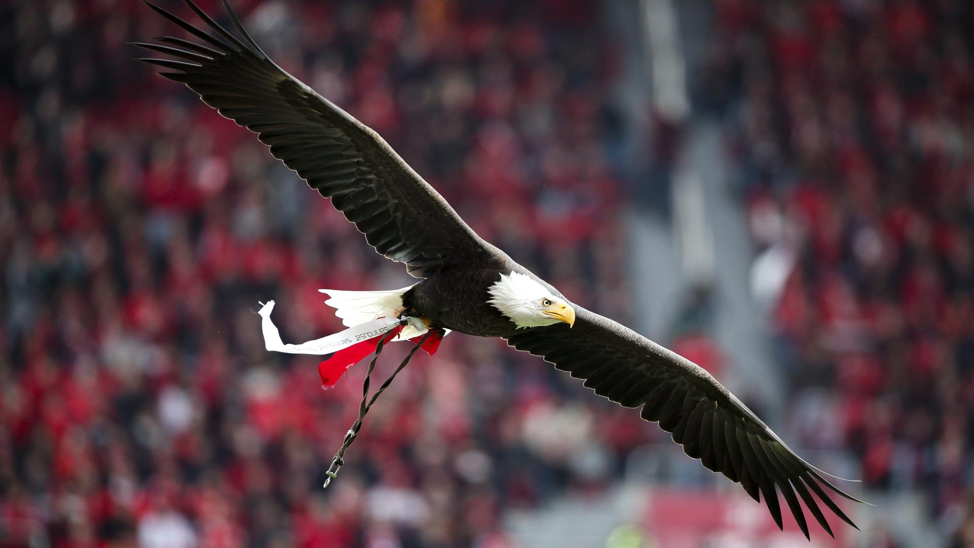 Derrota do Benfica prolonga-se esta segunda-feira. Ações deslizam 11%