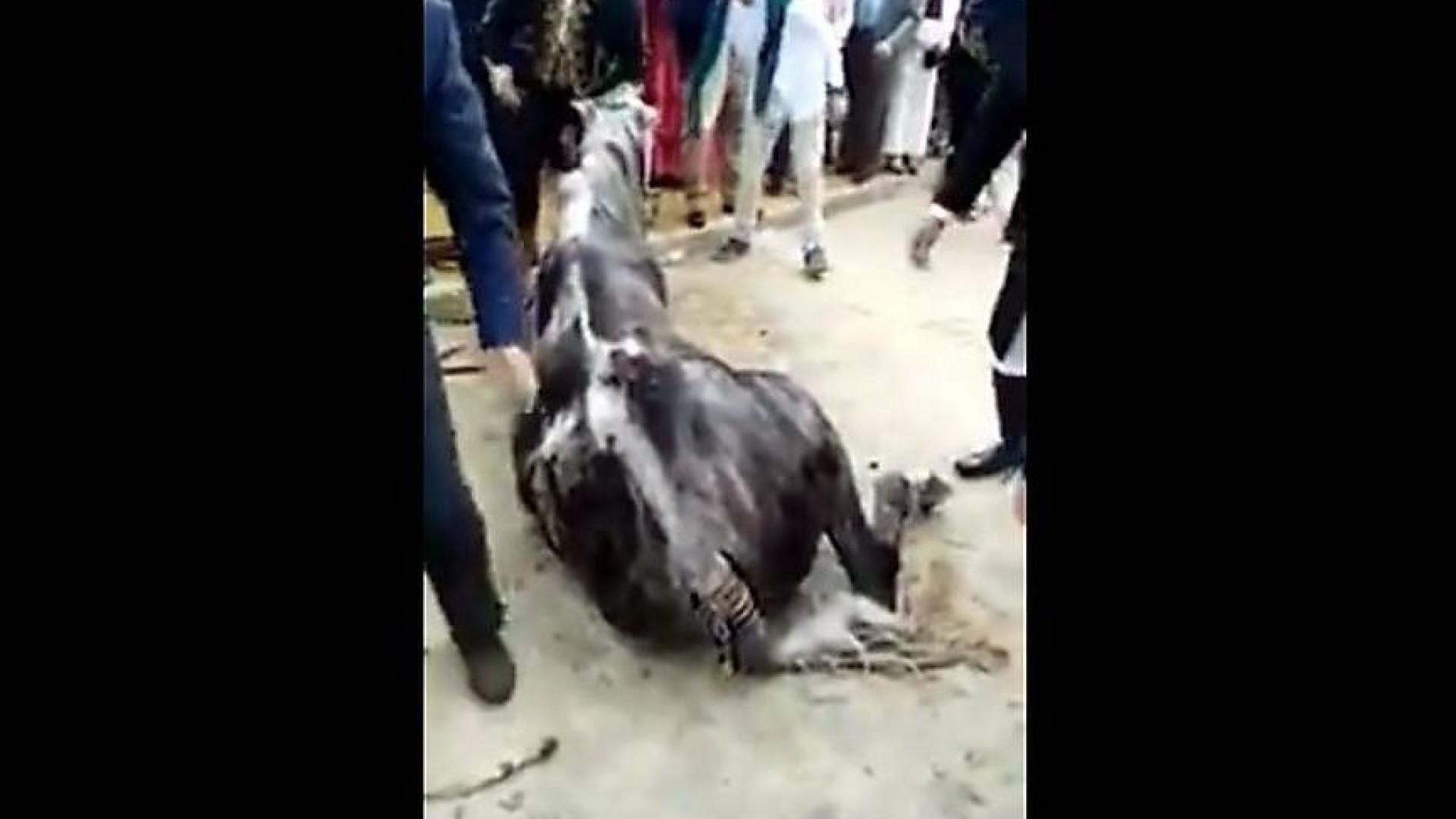 Cavalo morreu depois de ficar todo o dia sem comer em feira de Sevilha