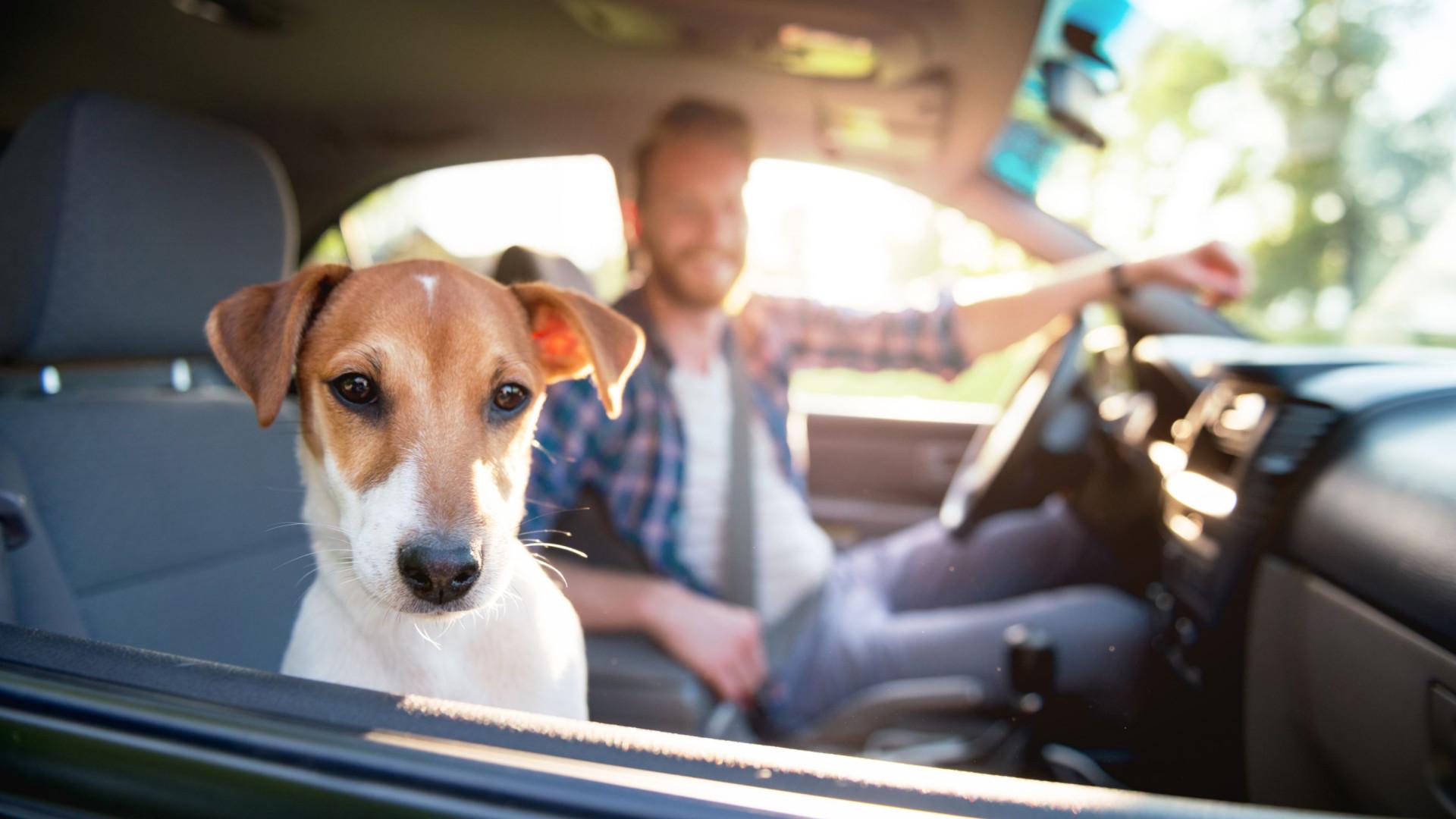 O seu cão lembra-se de tudo o que faz (atenção!)… diz estudo