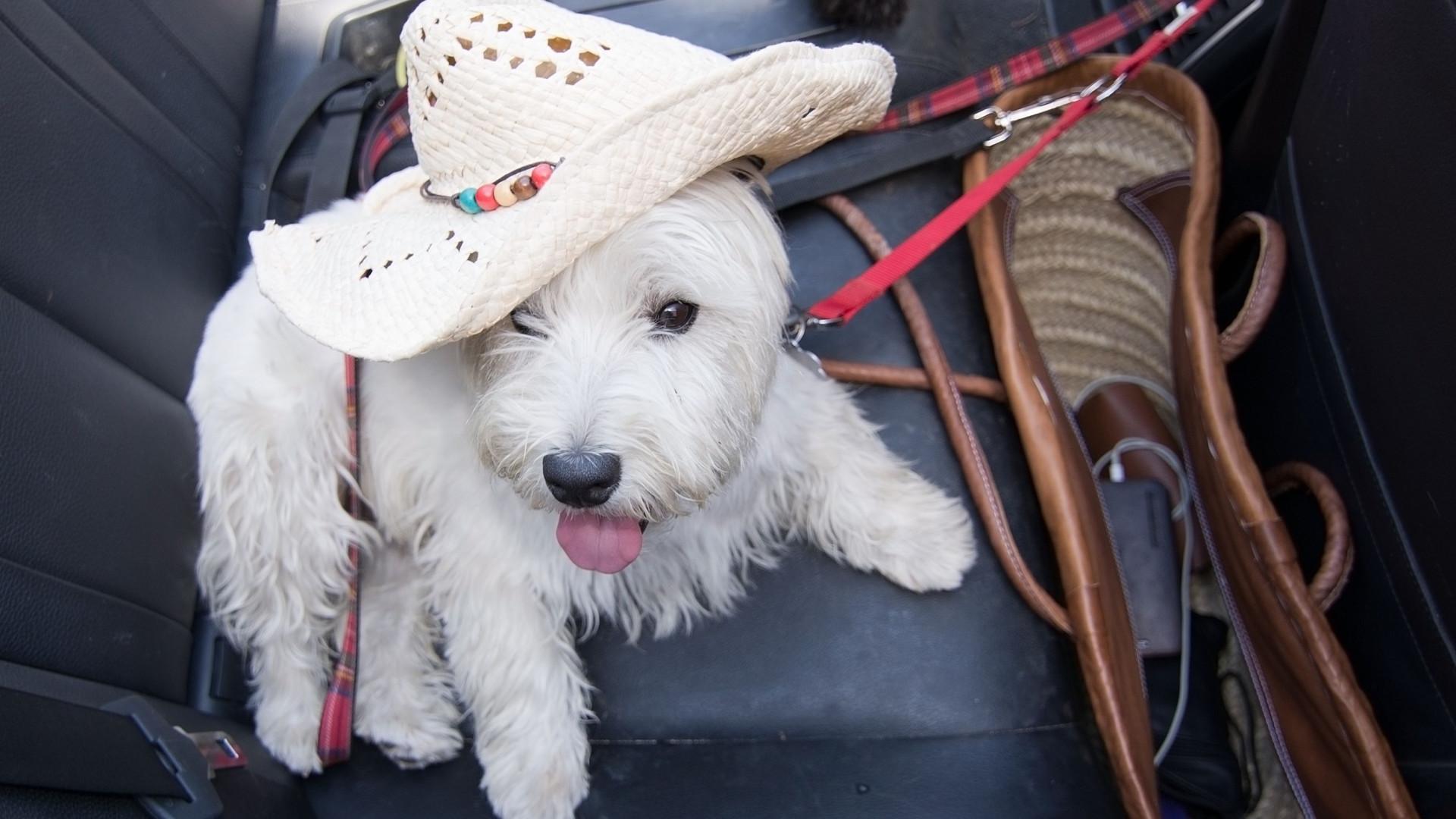 Como pode saber se o seu cão está a sofrer com um golpe de calor