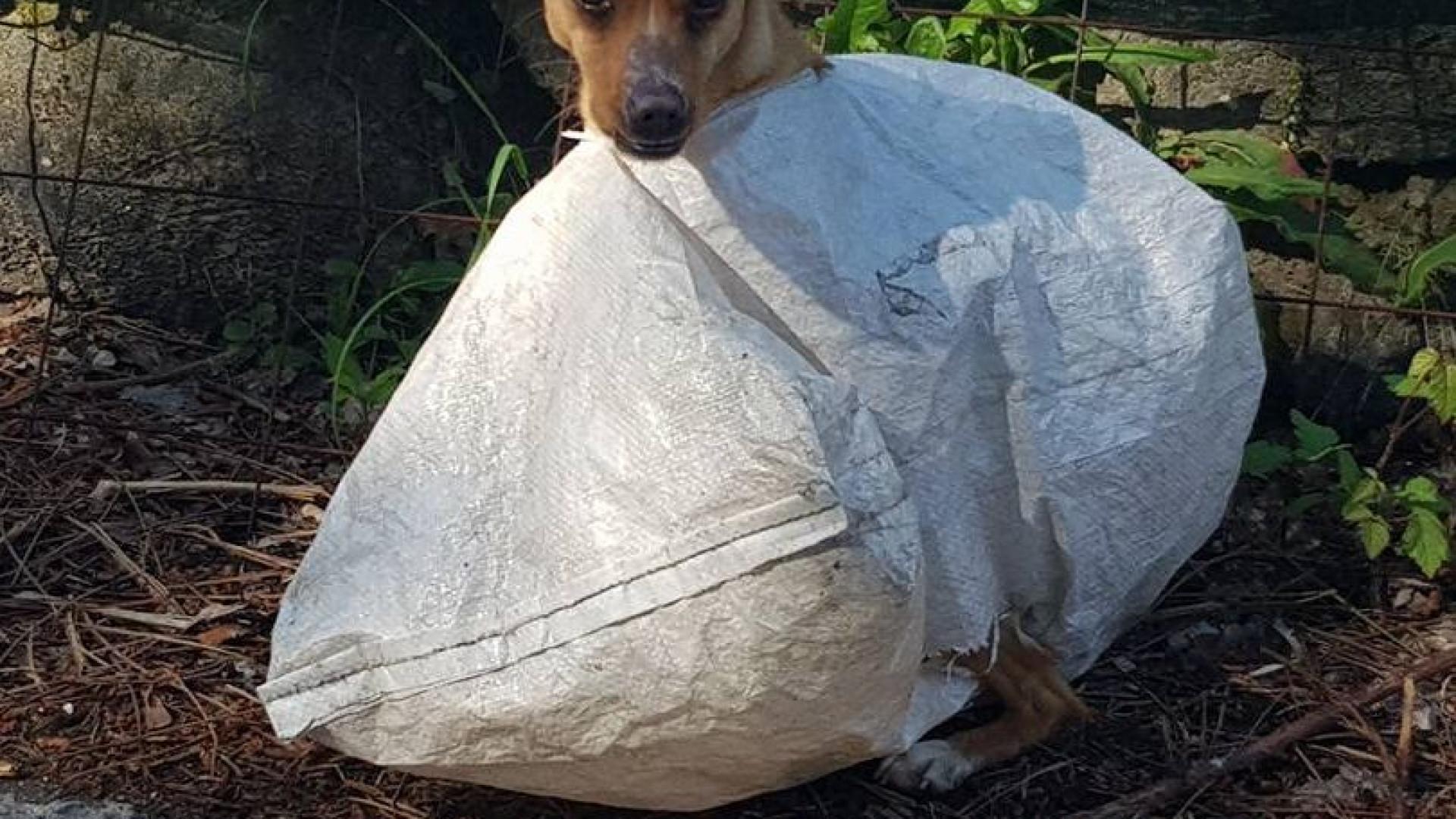 """Cadela encontrada dentro de saco, """"bem fechado"""", em Vila Verde"""
