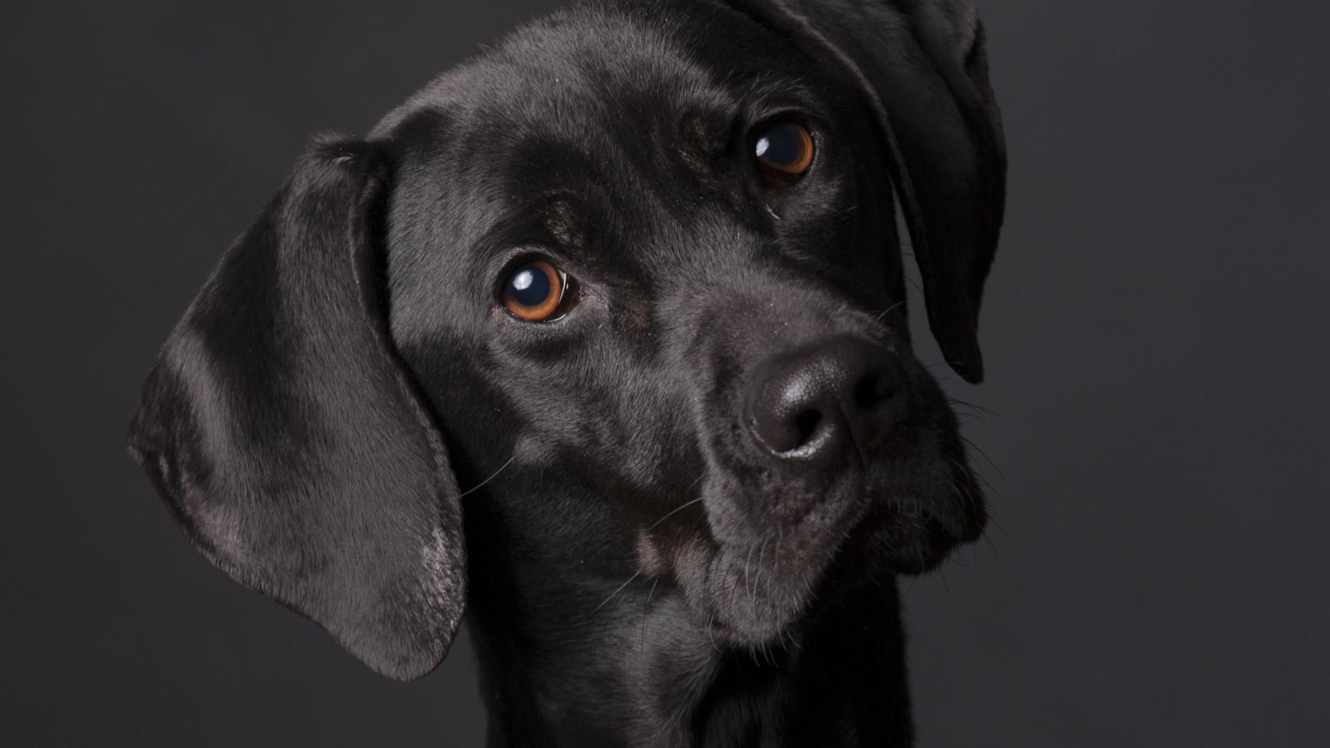 Aquilo que sempre suspeitou: O seu cão percebe o que diz