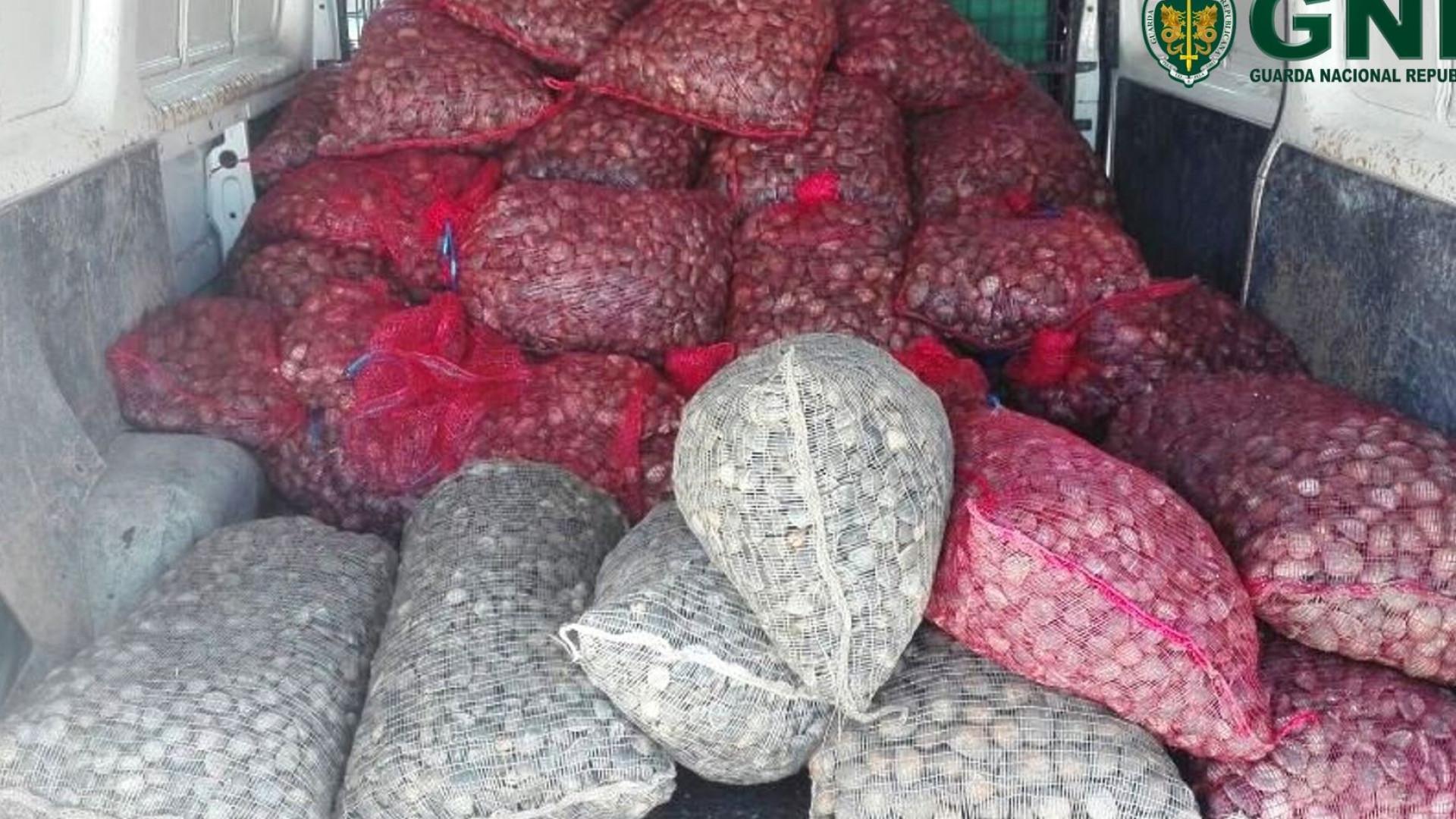 Perto de duas toneladas de amêijoas apreendidas em Alcochete
