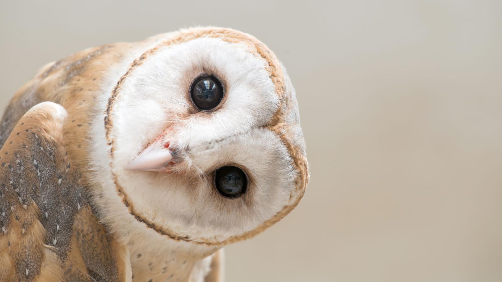 SABIA QUE a coruja não consegue mexer os globos oculares?