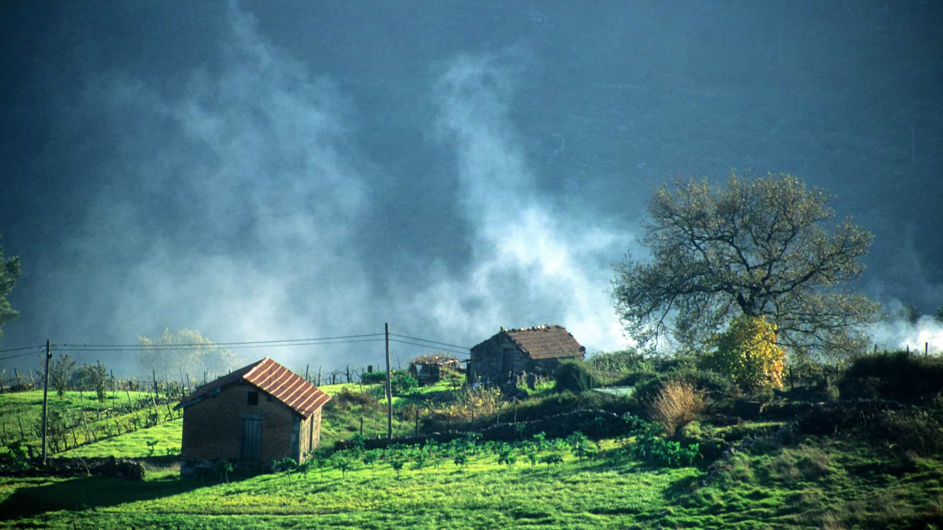 Quercus alerta para uso de pesticidas na Serra do Caramulo