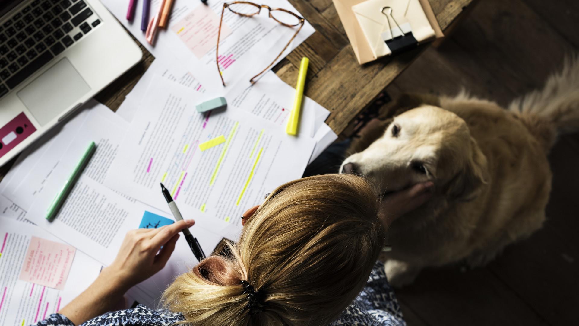 Animais de estimação ajudam a aliviar stress no meio académico
